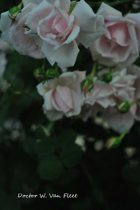 012_20120529084640.jpg