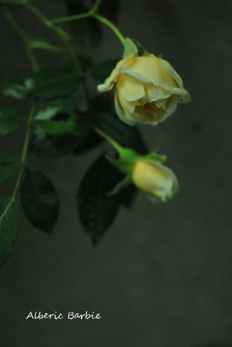 020_20120527093532.jpg