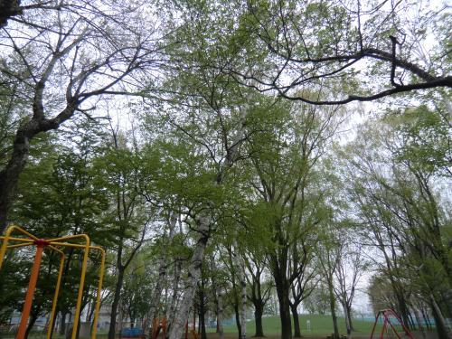 012_convert_20110522064726.jpg