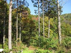 IMG_1425森林