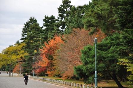 20101115kyoutogosyo1.jpg