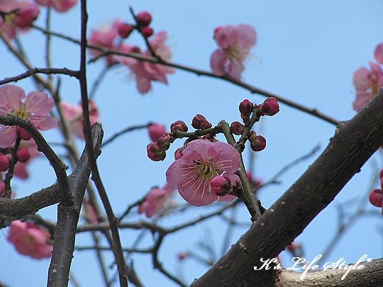 春だね・・・.jpg