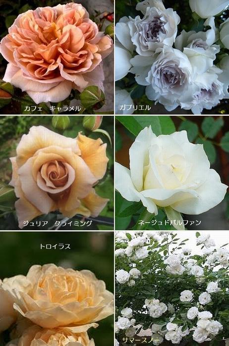 購入したバラたち・・・.jpg