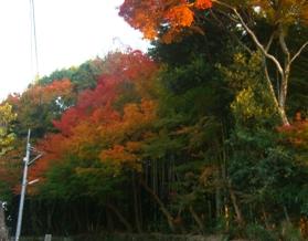 近所の紅葉1