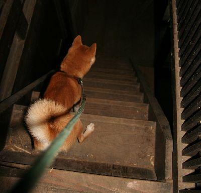 階段と犬2