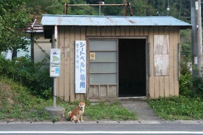 バス亭に柴犬