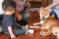 赤子と柴犬