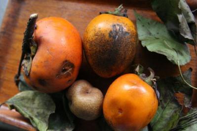 IMG_2899柿と梨