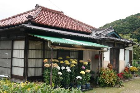 菊鉢植えの家