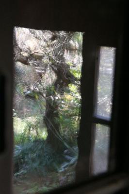 ガラスに映った梅の木
