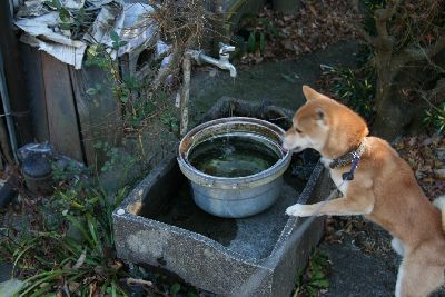 水道と柴犬