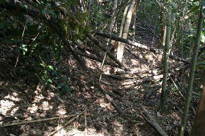 荒廃竹林の獣道