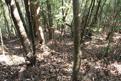 裏山の雑木林