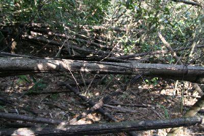 裏山の荒廃竹林