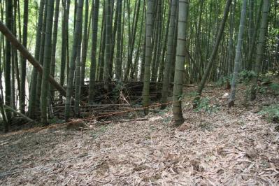 隣家の竹林