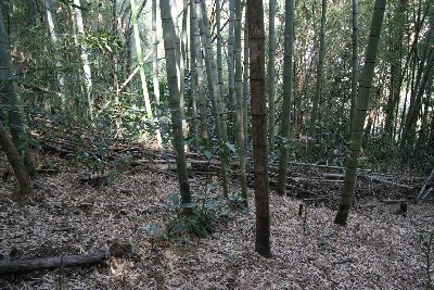 竹林の境界