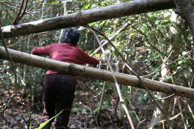 裏山の荒廃竹林探検