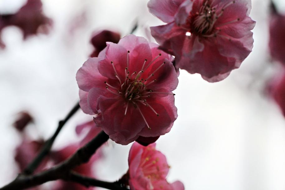 梅林公園 2012.03.10