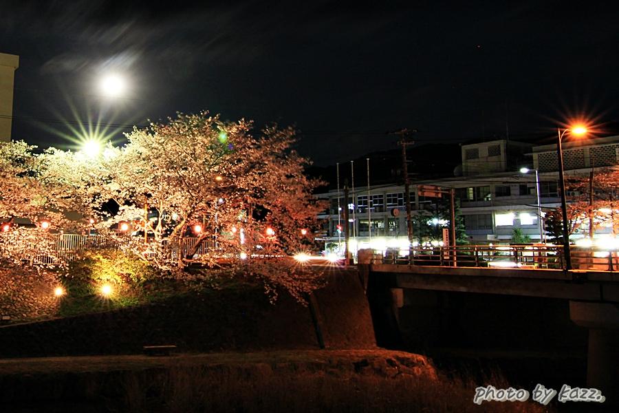 美祢市さくら公園4