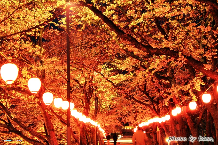 美祢市さくら公園1