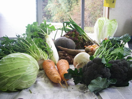 101208野菜