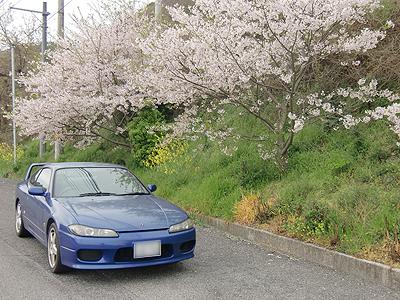 桜と菜の花とS15シルビア