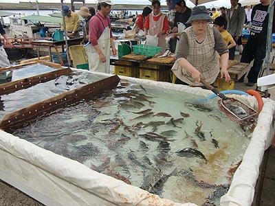 生須で泳ぐ活魚
