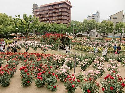 福山薔薇公園の薔薇