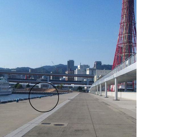 snap_kebabyamoto3_2010102204928.jpg