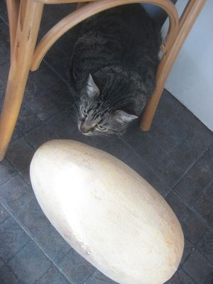 猫とメロン