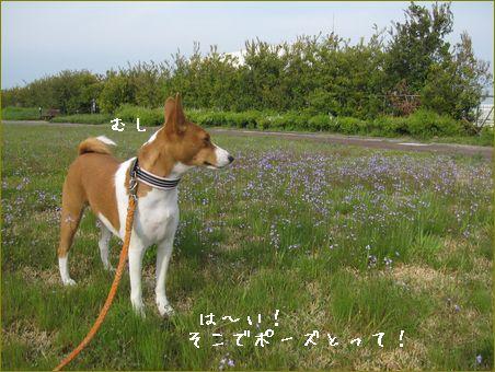 今年は浜松祭りが中止です。