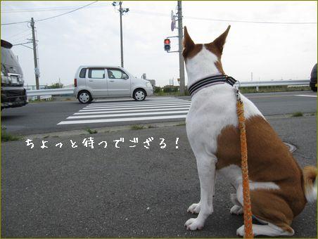 横断歩道の上に止まる車もあるのよ。