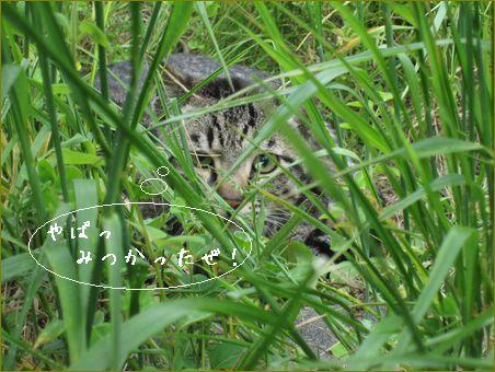 この日は隠れた猫を3匹見つけたよ。