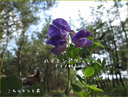 それにひきかえの野花は強いです。