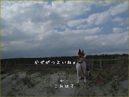 風が強くて寒いです。