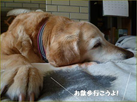 柏餅が食べたい。
