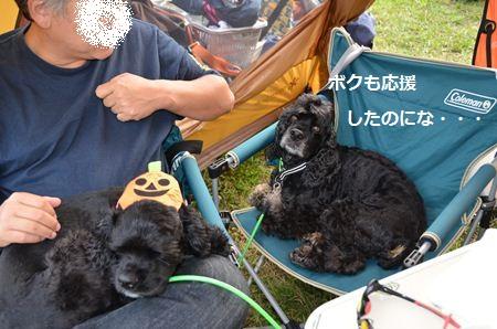 355saiko_R.jpg