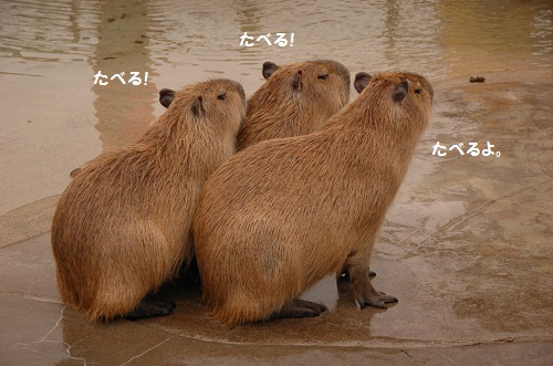 los animales 1