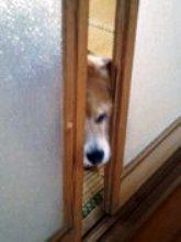 戸の開け方