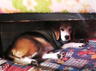 隠れる犬2