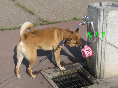 犬用コップ