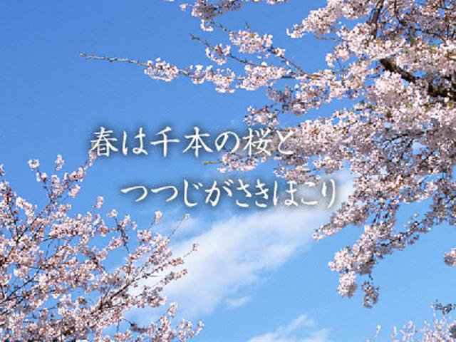 千石の郷 桜…