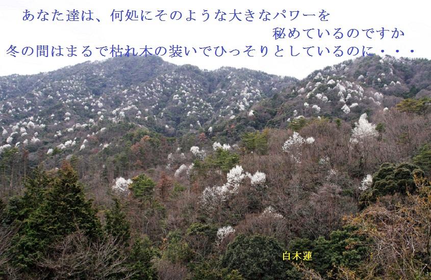 mokurenpw01m.jpg