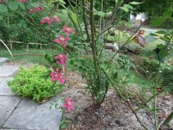 2010.06.14白野江植物公園 22