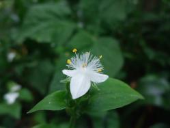2010.06.14白野江植物公園 11