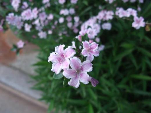 2010.5.16早朝ウォーキング