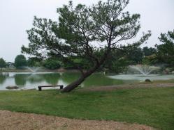 噴水の池と松