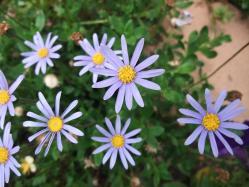紫の可愛い花