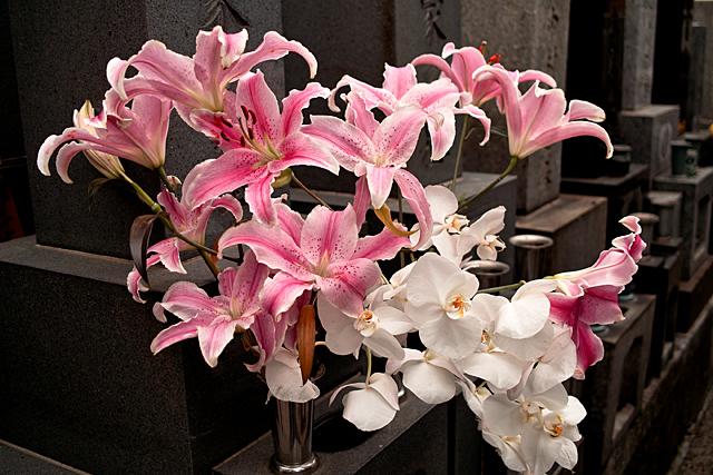 110505_009_浄閑寺墓地の花