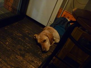画像/寝てるバジル